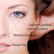 anatomie du sourcil idéal