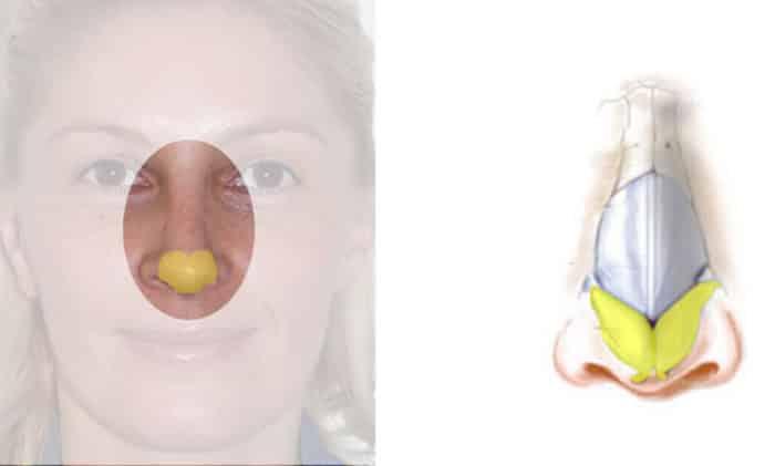anatomie de la pointe du nez