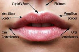 anatomie du gonflement des lèvres