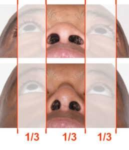 base du nez anatomie